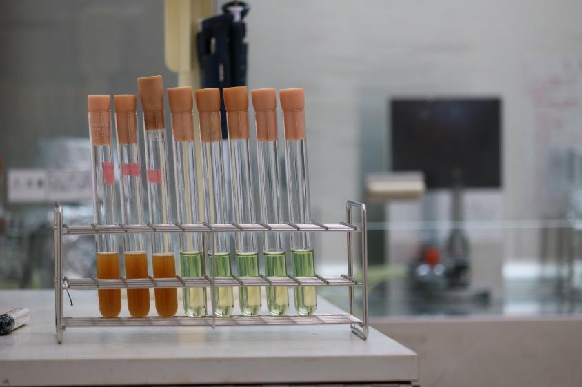 液体培養中の乳酸菌