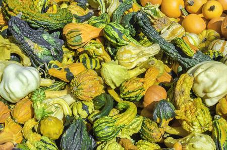 26630986 - pumpkins, cucurbita pepo