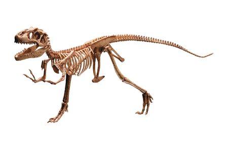 4632303 - dinosaur skeleton