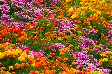 52254689 - garden flowers background