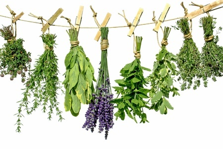 8994533 - herbs hanging upside-down from a line