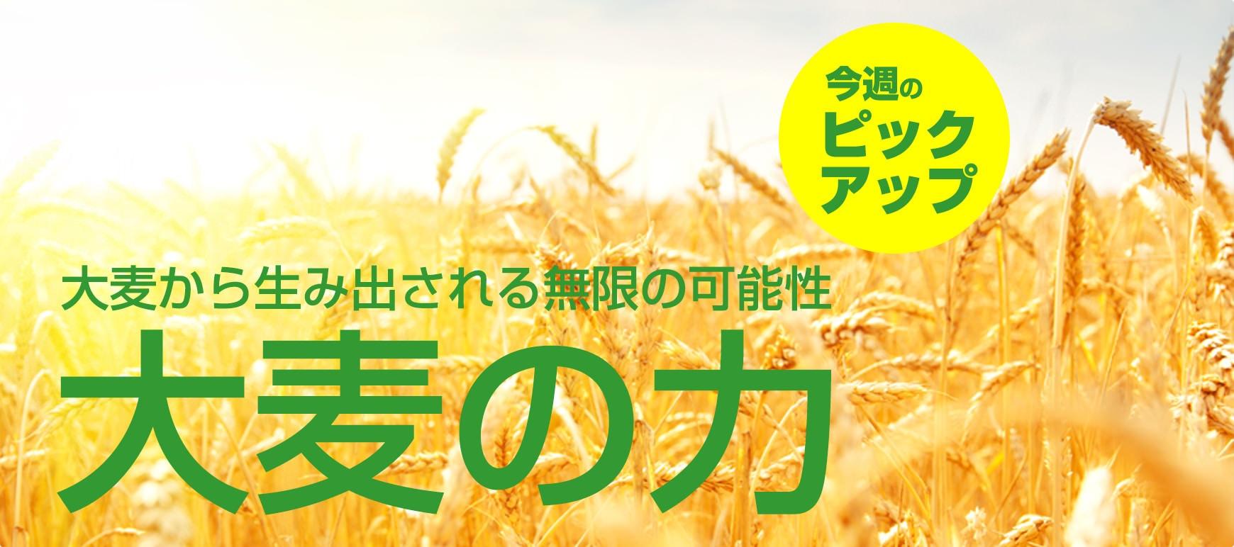 発酵大麦エキスの基礎知識